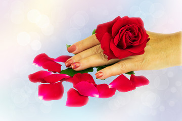 Closeup of female hand with manicured pink nails holds in the hand a natural fresh blossom from a red rose over bright pastel bokeh background. Concept beauty.