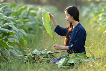 Vietnamese girl Asia is investigating the quality of tobacco