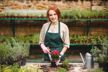 Smiling lady in apron and pink gloves using little garden shovel while planting a flower in pot and happily looking in camera in greenhouse