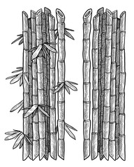 Bamboo branch, leaf illustration, drawing, engraving, ink, line art, vector