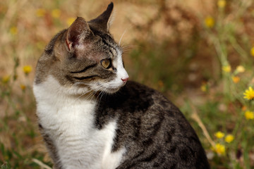 Portrait of feral white-brown striped cat in the countryside