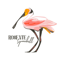 Hand drawn vector abstract cartoon summer time graphic decoration illustrations art with exotic tropical rainforest Roseate Spoonbill bird isolated on white background