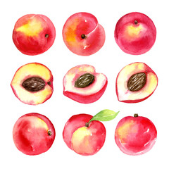 Juicy ripe peaches . Sliced fruits isolated on white background. Summer healthy food drawing.Hand-drawn watercolor illustration.