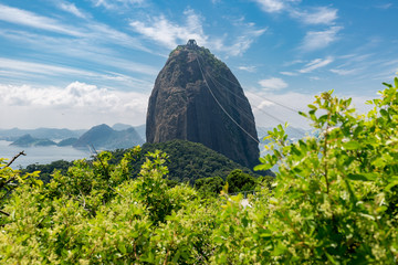 Sugarloaf mountain with foliage in the foreground Wall mural
