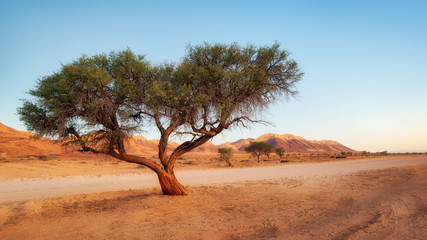 Lonely Tree in the Namib Desert taken in January 2018