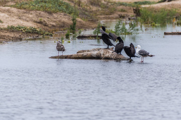 Estuary birds claim different tiers of elevation on the partially submerged log.