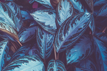 Background of green leaves of tropical plants. Fashionable Toning. The concept. Close-up.