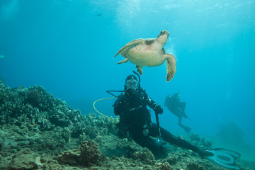 Scuba diver underwater photography with a sea turtle