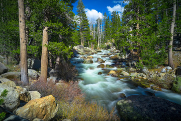 Poster River Smooth Flowing Tuolomne River and Mountain Forest - Yosemite National Park