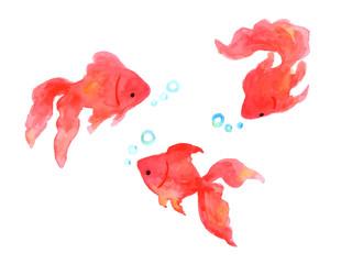 金魚水彩イラスト