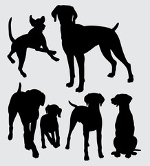 Viszla dog animal silhouette