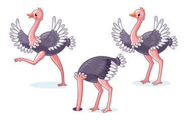 Set of ostriches in different poses. Cute bird on a white background in cartoon style. Vector illustration on a children's theme.