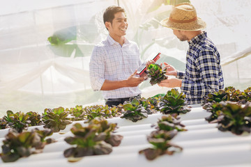 The smart owner of the hydroponics vegetable garden show his product and make a deal for sell Product to customer.