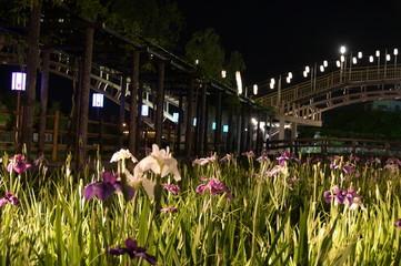菖蒲のライトアップ