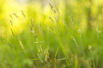 Abstract summer floral green yellow grass bokeh nature background close up