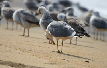 beautyful seagulls bird