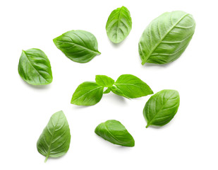 Fresh green basil leaves on white background