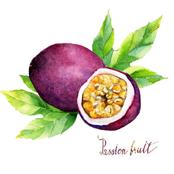 watercolor  illustration tropical fruit. Hand drawn on white background, passionfruit