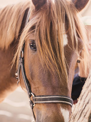 horse close-up on the field 3