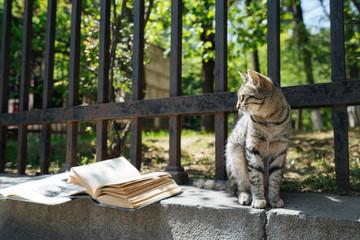 Stray cat on stone parapet