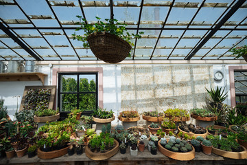 Beautiful greenhouse with plants in pots