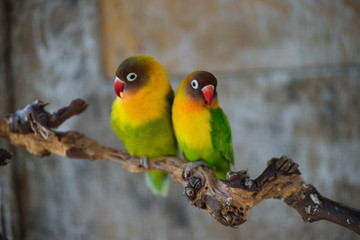 Bright funny parrots sitting on branch