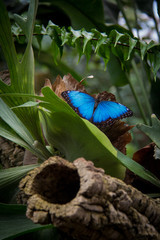 Benalmadena, Spain; March 29, 2018: Colorful butterflies