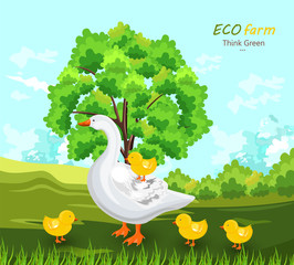 Duck and buds Vector. Eco farm concept. green summer backgrounds