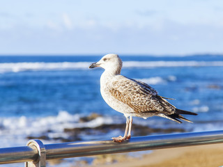 The seagull sits on a protection against the background of the sea