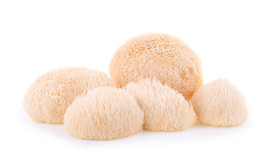 Lion mane mushroom isolated on white background