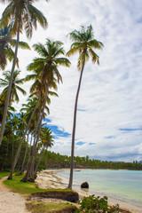 Tropical beach ladscape