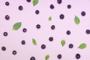 .Black summer berry on a pink tinted background.