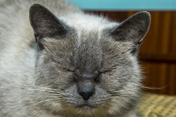 Fotografia ravvicinata al gatto che dorme