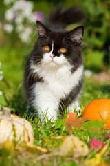 Schwarzweißes Kätzchen im herbstlichen Gartenn