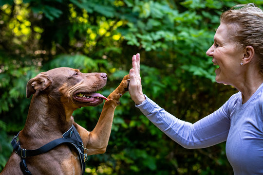 A middle aged woman and her two toned brown dog out in the woods, dog and woman playing high five and smiling