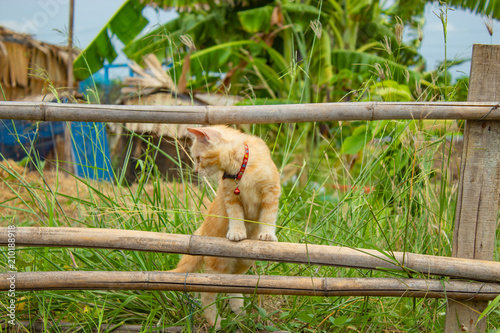 Brown cat standing on a bamboo fence in the garden