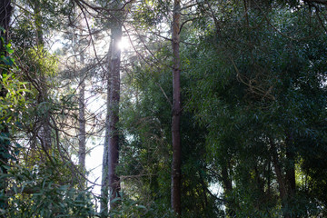 sun through the trees, forest landscape