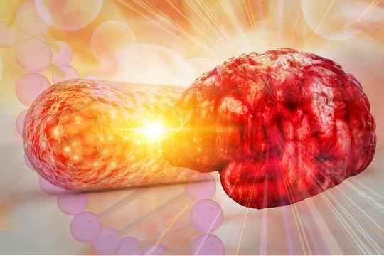 gut bacteria and brain Gut Bacteria and Epilepsy; Zika Neurological Risk; Diagnosing Brain eating bacteria 3d rendering
