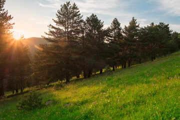 the sun at sunset in the evening lights up the fields with green grass and coniferous trees, landscape panorama