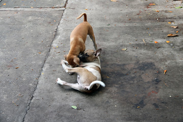 Couple of small dog gayly play together on the concrete floor, dog is a domesticated carnivorous mammal that typically has a long snout.