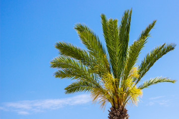 travel and summer concept - palm tree over blue sky