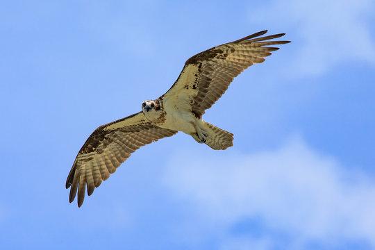 Seahawk sharing at you