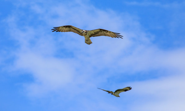 Seahawks passing in flight