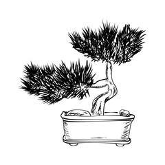 Bonsai vector illustration
