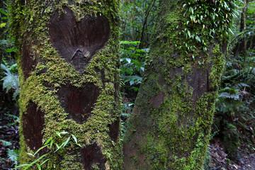 Love hearts on tree