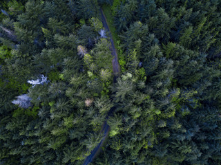 Aerial Overhead View Of The Forest In Washingtons Olympic National Park