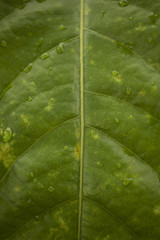 Close up green leaf texture background. Image macro details.