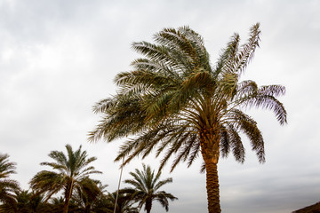 Palm trees with green grass and cloudy sky