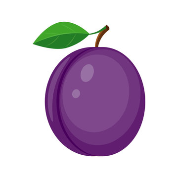 Colorful juicy plum with green leaf vector illustration isolated