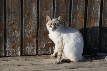 Einsame verlassene Katze ohne Zuhause...